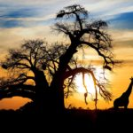 Viaggi di nozze - Namibia
