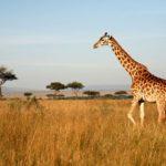 Viaggi di nozze in Africa